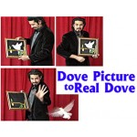 Dove Picture to Real Dove - Tora