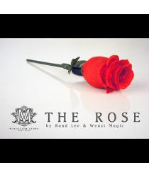 The Rose by Bond Lee & Wenzi Magic - Trick